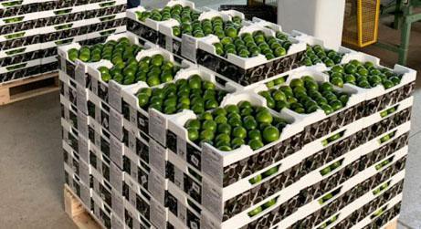 Conservadoras DaColheita são usadas na exportação de limão